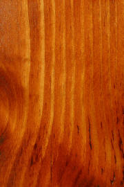 "Knotty Pine doors with ""Curly Maple"" finish"